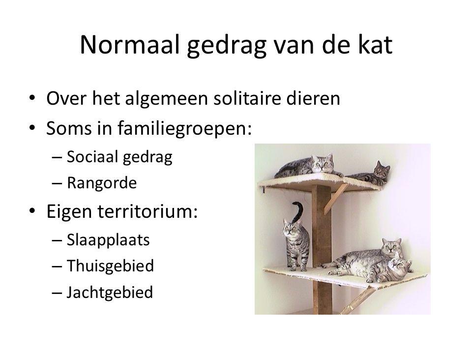 Normaal gedrag van de kat Over het algemeen solitaire dieren Soms in familiegroepen: – Sociaal gedrag – Rangorde Eigen territorium: – Slaapplaats – Thuisgebied – Jachtgebied