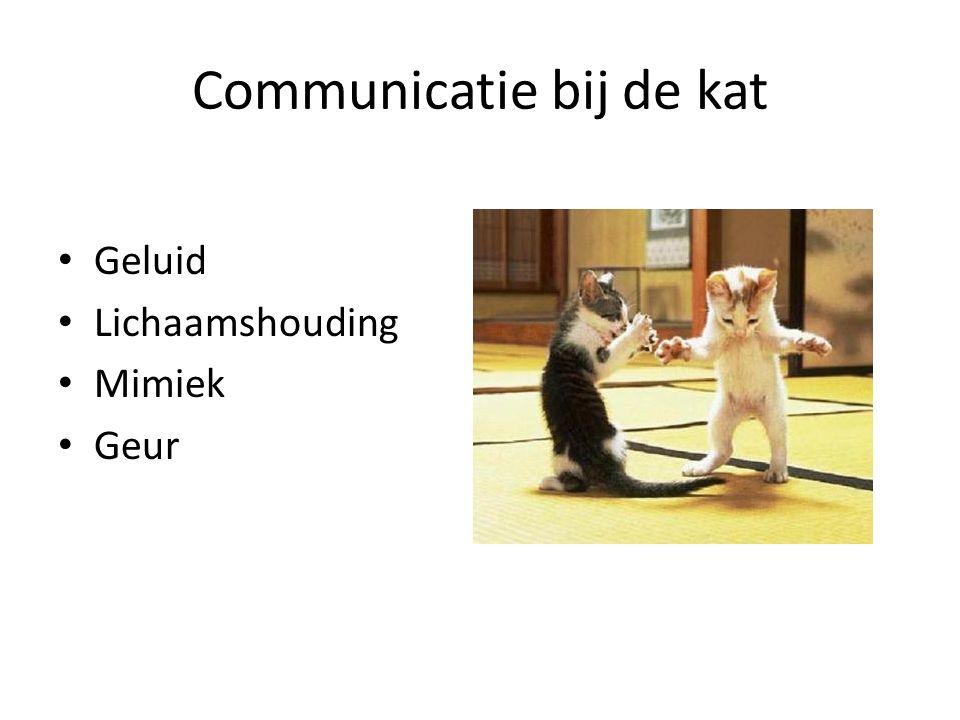 Communicatie bij de kat Geluid Lichaamshouding Mimiek Geur