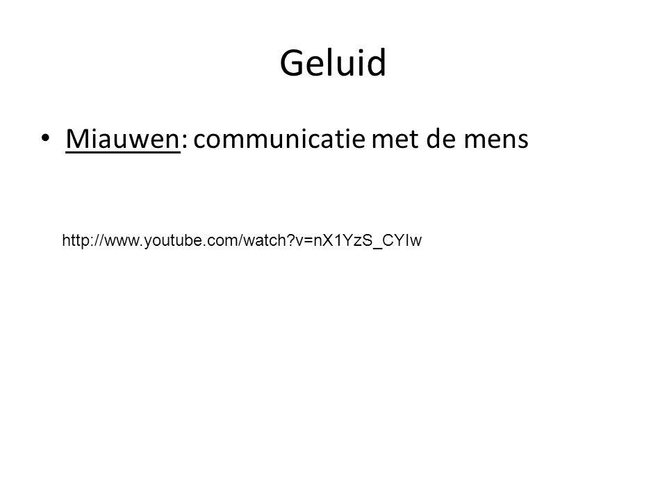Geluid Miauwen: communicatie met de mens http://www.youtube.com/watch?v=nX1YzS_CYIw