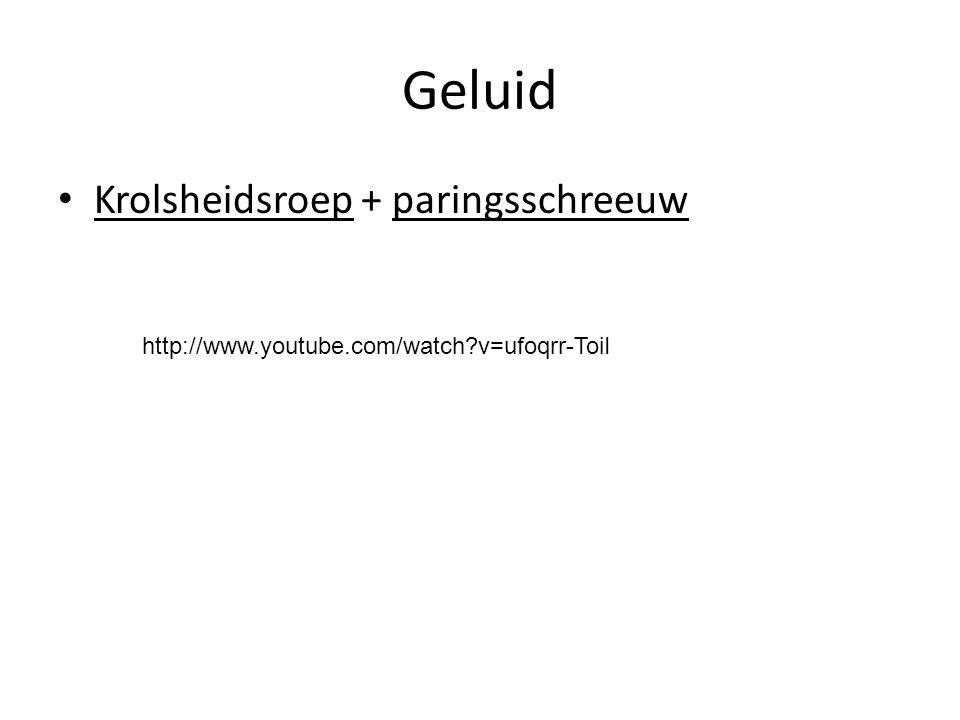Geluid Krolsheidsroep + paringsschreeuw http://www.youtube.com/watch?v=ufoqrr-ToiI