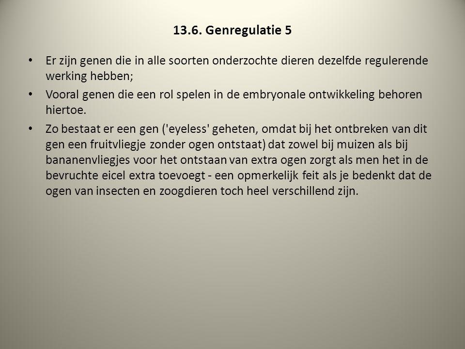 13.6. Genregulatie 5 Er zijn genen die in alle soorten onderzochte dieren dezelfde regulerende werking hebben; Vooral genen die een rol spelen in de e