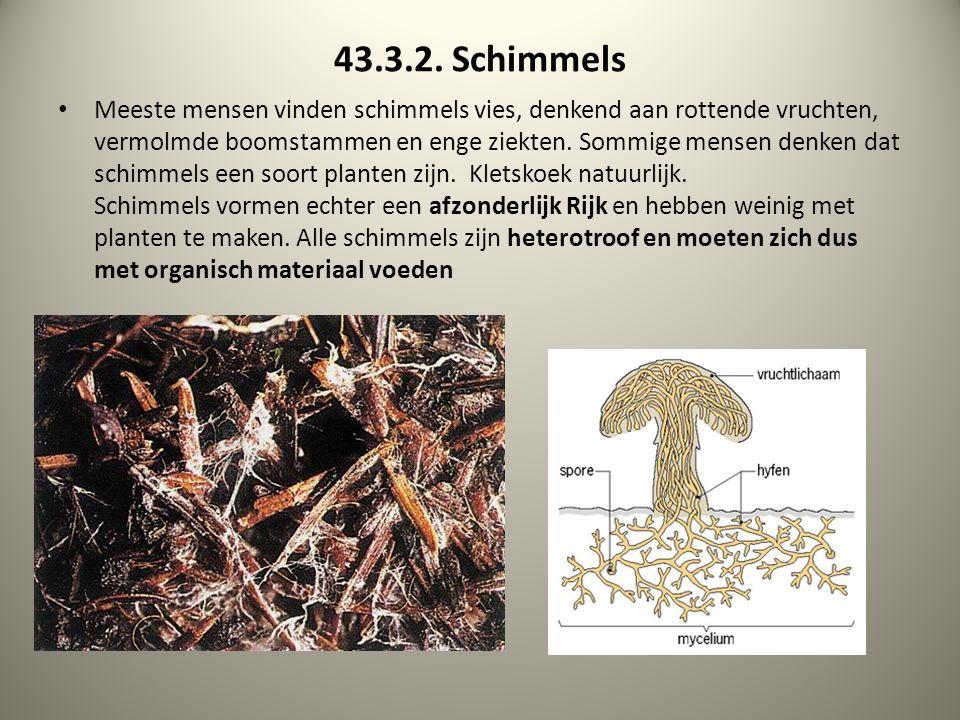 43.3.2. Schimmels Meeste mensen vinden schimmels vies, denkend aan rottende vruchten, vermolmde boomstammen en enge ziekten. Sommige mensen denken dat