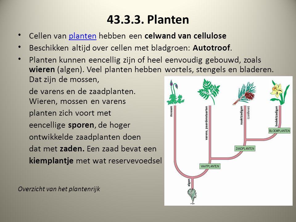 43.3.3. Planten Cellen van planten hebben een celwand van celluloseplanten Beschikken altijd over cellen met bladgroen: Autotroof. Planten kunnen eenc
