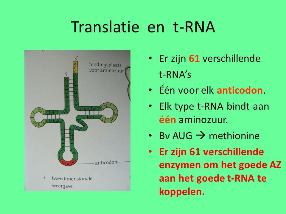 Translatie en t-RNA Er zijn 61 verschillende t-RNA's Één voor elk anticodon.