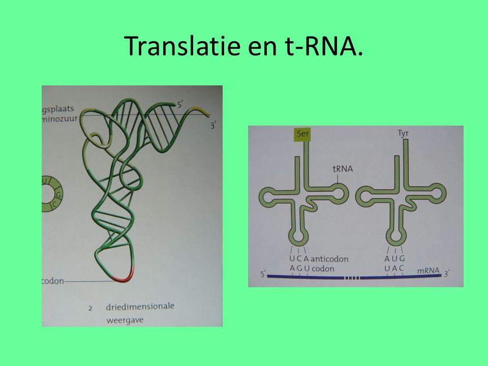 Translatie en t-RNA.