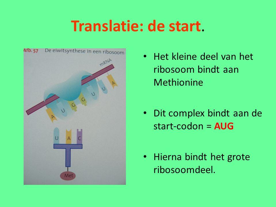 Translatie: de start.