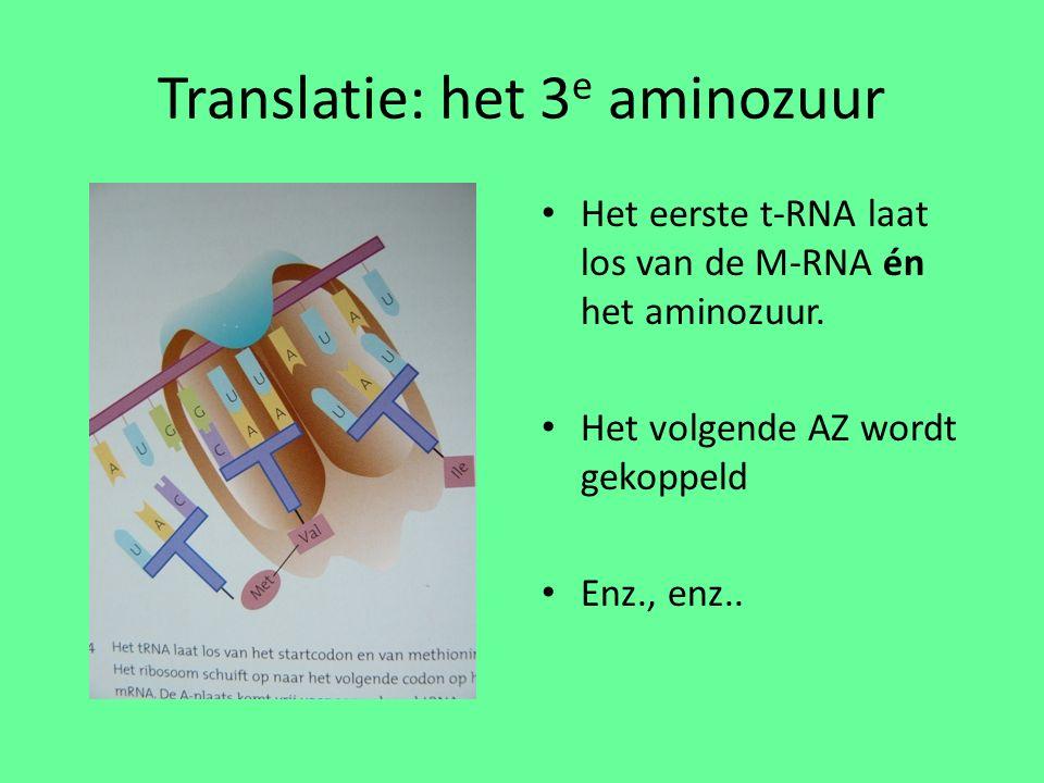 Translatie: het 3 e aminozuur Het eerste t-RNA laat los van de M-RNA én het aminozuur.