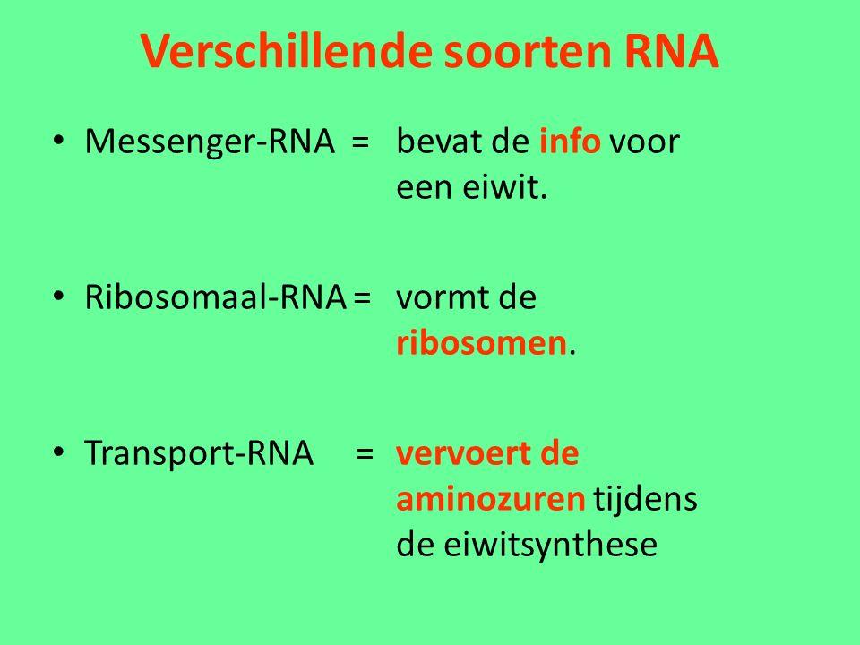 Verschillende soorten RNA Messenger-RNA = bevat de info voor een eiwit.