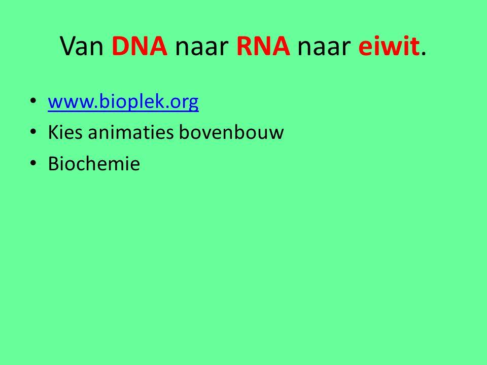 Van DNA naar RNA naar eiwit. www.bioplek.org Kies animaties bovenbouw Biochemie