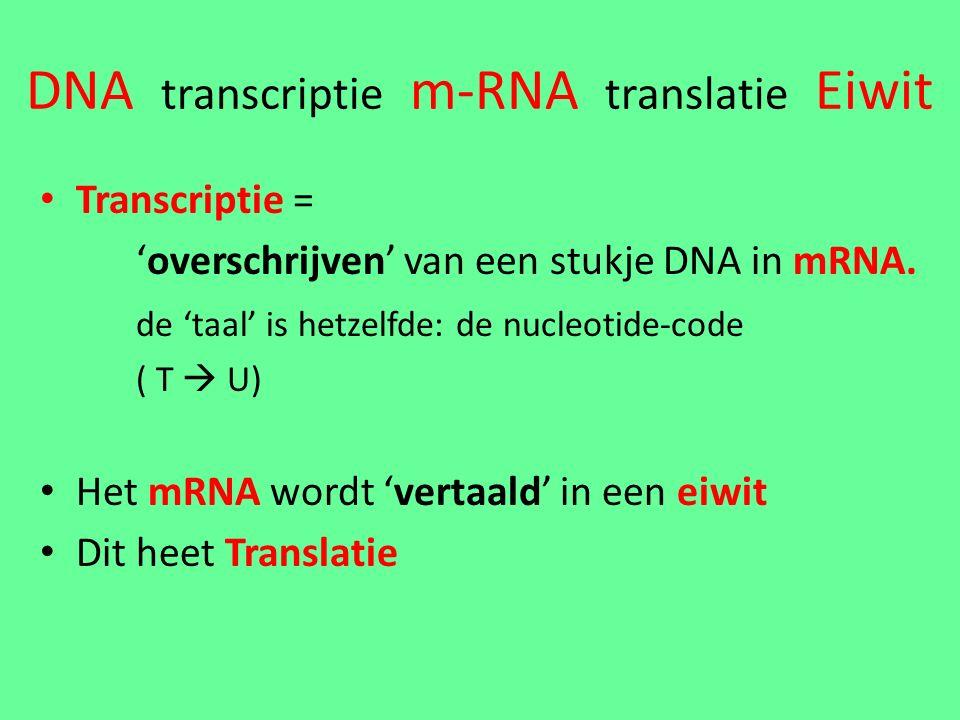 DNA transcriptie m-RNA translatie Eiwit Transcriptie = 'overschrijven' van een stukje DNA in mRNA.