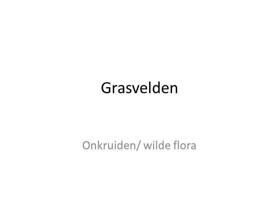 Grasvelden Onkruiden/ wilde flora