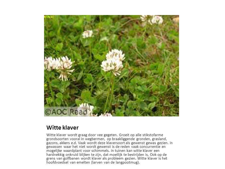 Witte klaver Witte klaver wordt graag door vee gegeten. Groeit op alle stikstofarme grondsoorten vooral in wegbermen, op braakliggende gronden, grasla