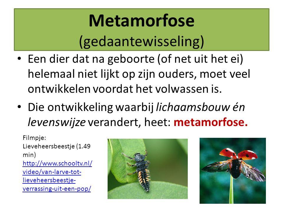 Metamorfose (gedaantewisseling) Een dier dat na geboorte (of net uit het ei) helemaal niet lijkt op zijn ouders, moet veel ontwikkelen voordat het vol