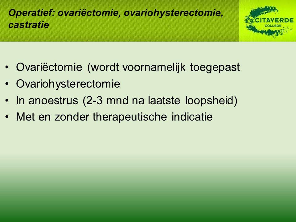 Ovariëctomie (wordt voornamelijk toegepast Ovariohysterectomie In anoestrus (2-3 mnd na laatste loopsheid) Met en zonder therapeutische indicatie Oper