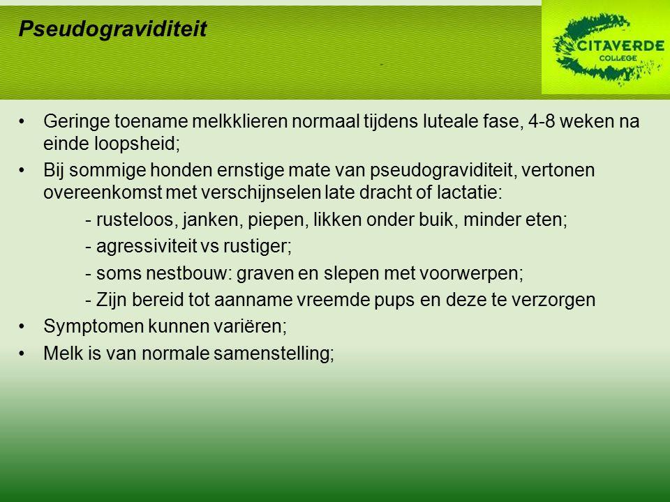 Geringe toename melkklieren normaal tijdens luteale fase, 4-8 weken na einde loopsheid; Bij sommige honden ernstige mate van pseudograviditeit, verton