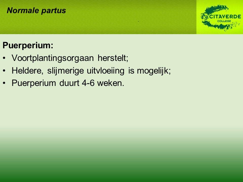 Puerperium: Voortplantingsorgaan herstelt; Heldere, slijmerige uitvloeiing is mogelijk; Puerperium duurt 4-6 weken. Normale partus