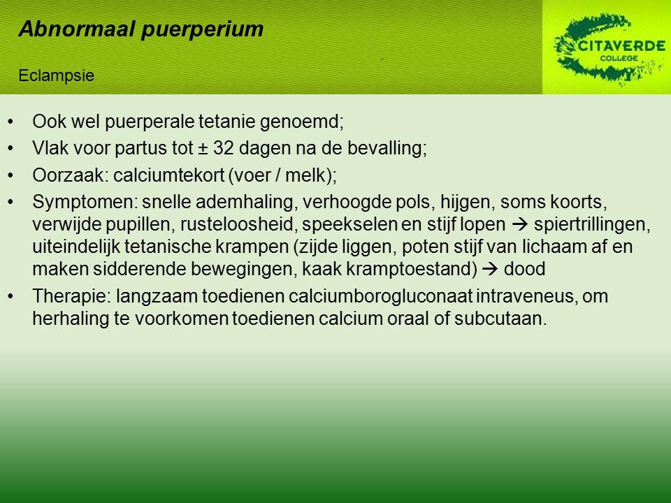 Ook wel puerperale tetanie genoemd; Vlak voor partus tot ± 32 dagen na de bevalling; Oorzaak: calciumtekort (voer / melk); Symptomen: snelle ademhalin