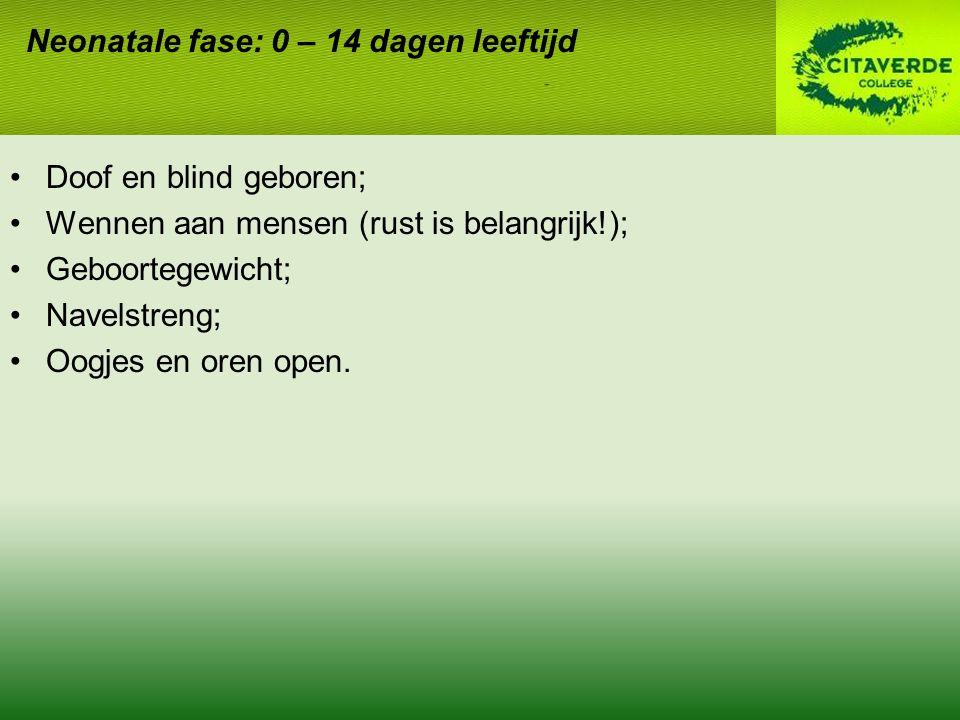 Doof en blind geboren; Wennen aan mensen (rust is belangrijk!); Geboortegewicht; Navelstreng; Oogjes en oren open. Neonatale fase: 0 – 14 dagen leefti