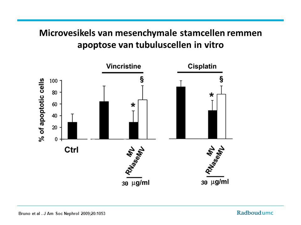 Microvesikels van mesenchymale stamcellen remmen apoptose van tubuluscellen in vitro Bruno et al. J Am Soc Nephrol 2009;20:1053