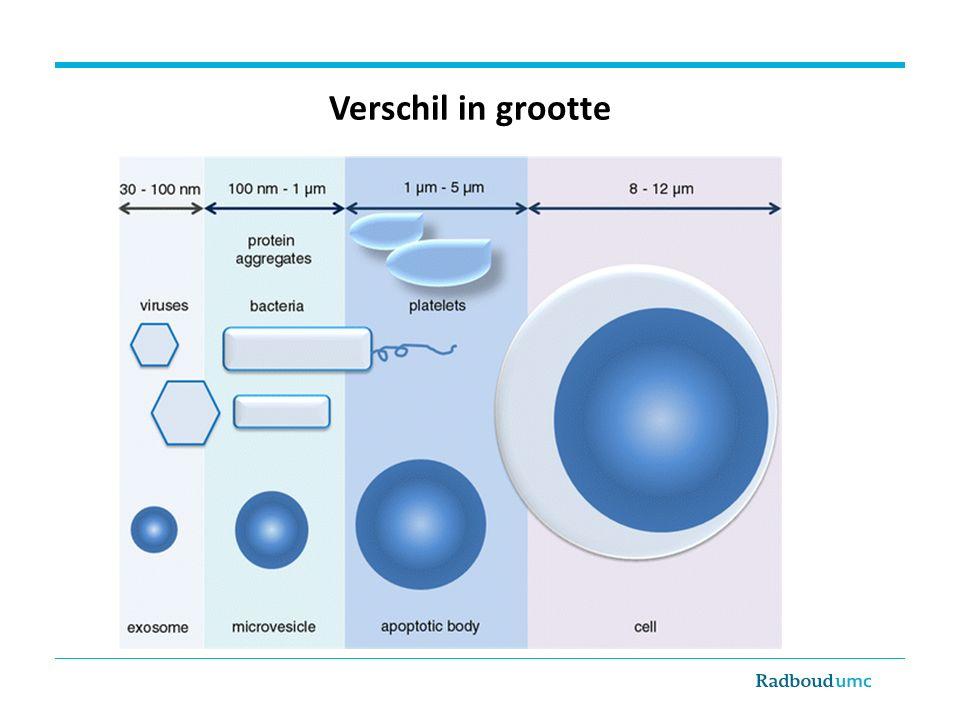 Intraveneuze toediening van microvesikels versnelt herstel acute nierinsufficiëntie in muismodel Bruno et al.