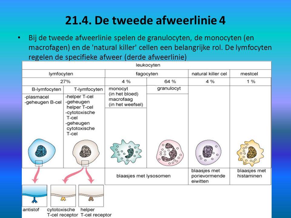 21.4. De tweede afweerlinie 4 Bij de tweede afweerlinie spelen de granulocyten, de monocyten (en macrofagen) en de 'natural killer' cellen een belangr