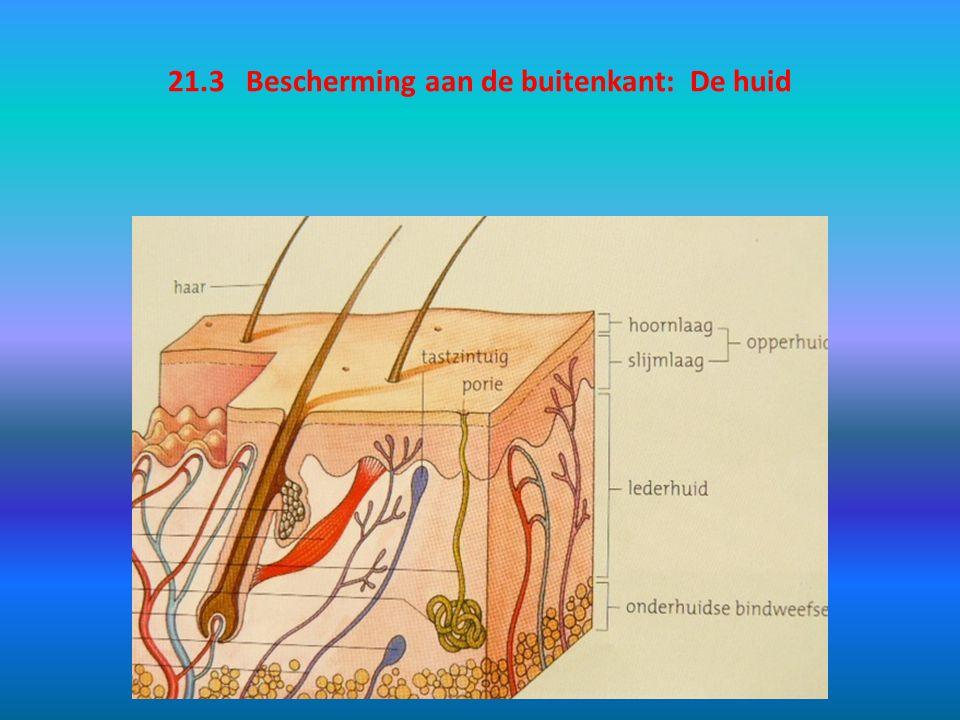 21.3 Bescherming aan de buitenkant: De huid