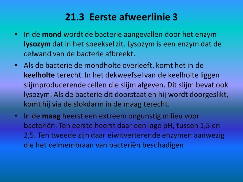 21.3 Eerste afweerlinie 4 Als de bacterie ook de pH-schok en de eiwitverterende enzymen van de maag heeft weten te doorstaan, reist hij verder naar de twaalfvingerige darm, dunne darm en dikke darm.
