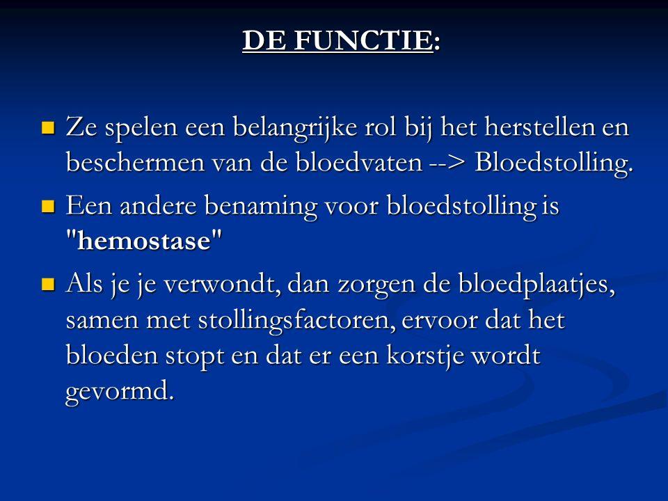DE FUNCTIE: Ze spelen een belangrijke rol bij het herstellen en beschermen van de bloedvaten --> Bloedstolling. Ze spelen een belangrijke rol bij het