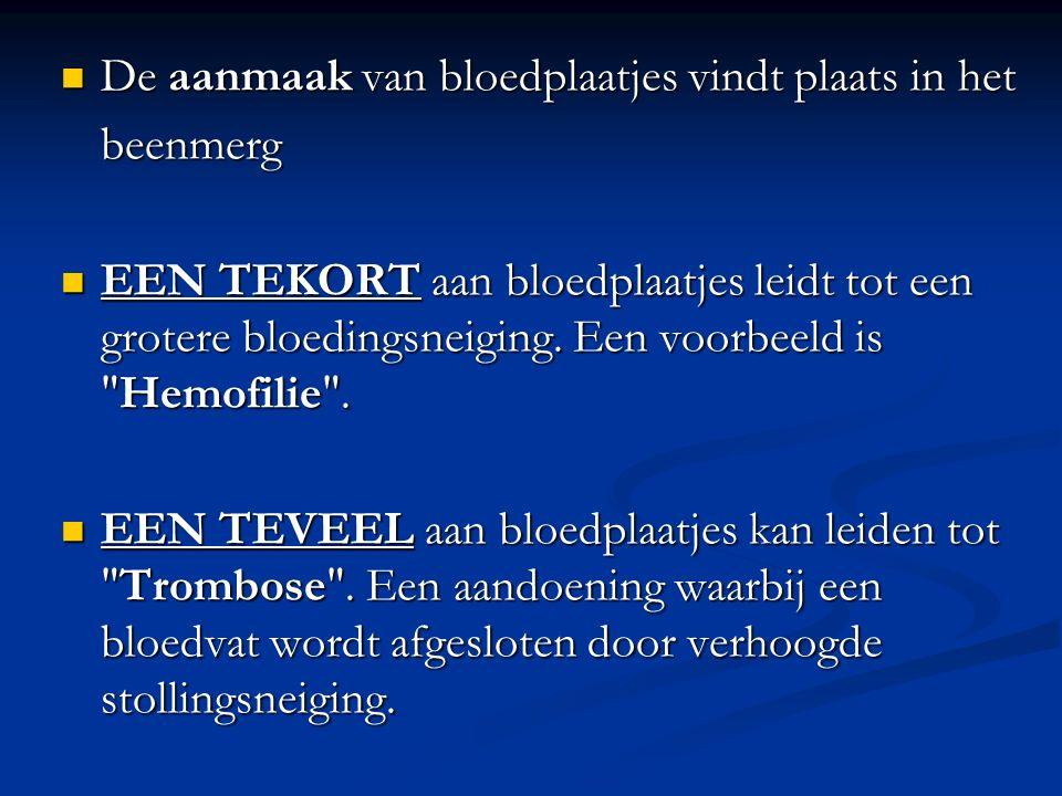 De aanmaak van bloedplaatjes vindt plaats in het De aanmaak van bloedplaatjes vindt plaats in hetbeenmerg EEN TEKORT aan bloedplaatjes leidt tot een grotere bloedingsneiging.