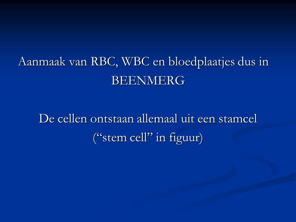 """Aanmaak van RBC, WBC en bloedplaatjes dus in BEENMERG De cellen ontstaan allemaal uit een stamcel (""""stem cell"""" in figuur)"""