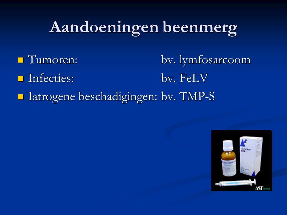 Aandoeningen beenmerg Tumoren: bv. lymfosarcoom Tumoren: bv. lymfosarcoom Infecties: bv. FeLV Infecties: bv. FeLV Iatrogene beschadigingen: bv. TMP-S