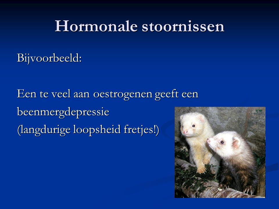 Hormonale stoornissen Bijvoorbeeld: Een te veel aan oestrogenen geeft een beenmergdepressie (langdurige loopsheid fretjes!)