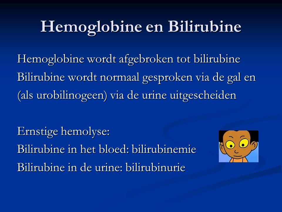 Hemoglobine en Bilirubine Hemoglobine wordt afgebroken tot bilirubine Bilirubine wordt normaal gesproken via de gal en (als urobilinogeen) via de urine uitgescheiden Ernstige hemolyse: Bilirubine in het bloed: bilirubinemie Bilirubine in de urine: bilirubinurie