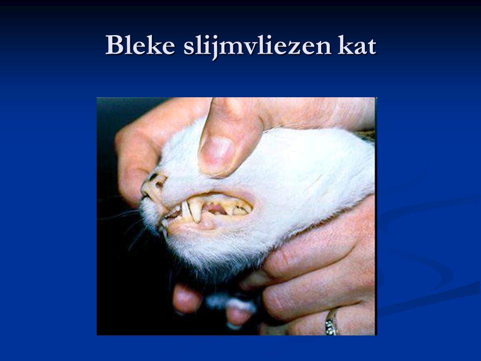 Bleke slijmvliezen kat