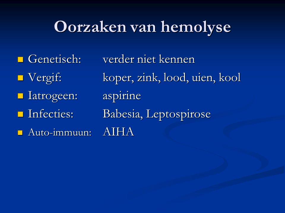 Oorzaken van hemolyse Genetisch:verder niet kennen Genetisch:verder niet kennen Vergif:koper, zink, lood, uien, kool Vergif:koper, zink, lood, uien, kool Iatrogeen:aspirine Iatrogeen:aspirine Infecties: Babesia, Leptospirose Infecties: Babesia, Leptospirose Auto-immuun: AIHA Auto-immuun: AIHA