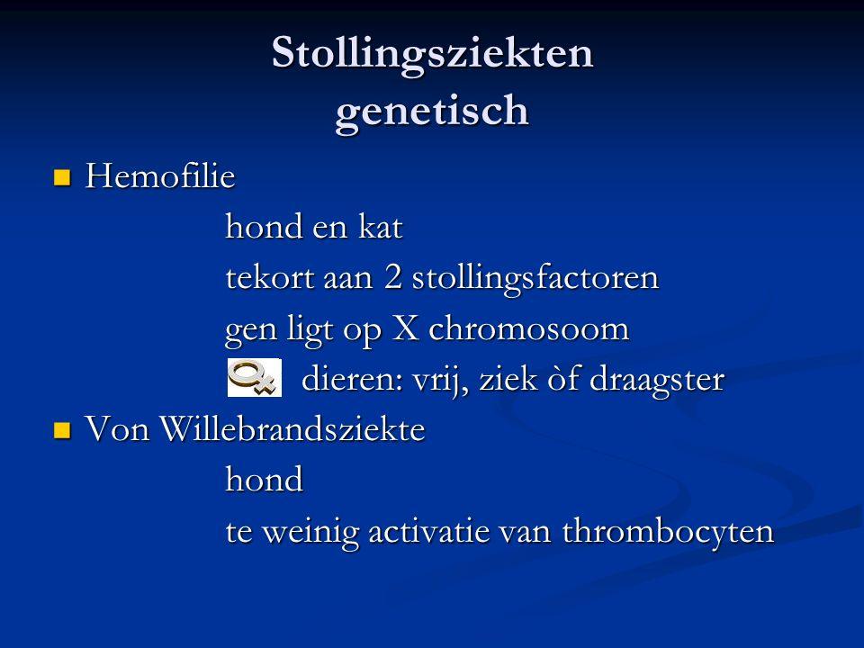 Stollingsziekten genetisch Hemofilie Hemofilie hond en kat tekort aan 2 stollingsfactoren gen ligt op X chromosoom dieren: vrij, ziek òf draagster dieren: vrij, ziek òf draagster Von Willebrandsziekte Von Willebrandsziektehond te weinig activatie van thrombocyten