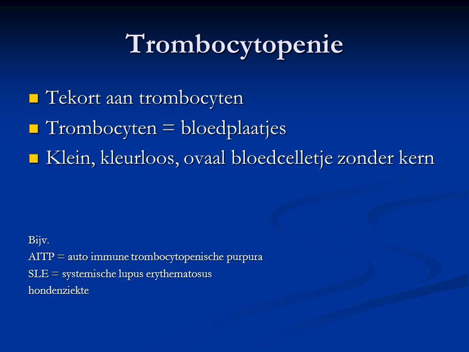 Trombocytopenie Tekort aan trombocyten Tekort aan trombocyten Trombocyten = bloedplaatjes Trombocyten = bloedplaatjes Klein, kleurloos, ovaal bloedcelletje zonder kern Klein, kleurloos, ovaal bloedcelletje zonder kernBijv.