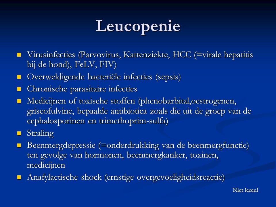 Leucopenie Virusinfecties (Parvovirus, Kattenziekte, HCC (=virale hepatitis bij de hond), FeLV, FIV) Virusinfecties (Parvovirus, Kattenziekte, HCC (=virale hepatitis bij de hond), FeLV, FIV) Overweldigende bacteriële infecties (sepsis) Overweldigende bacteriële infecties (sepsis) Chronische parasitaire infecties Chronische parasitaire infecties Medicijnen of toxische stoffen (phenobarbital,oestrogenen, griseofulvine, bepaalde antibiotica zoals die uit de groep van de cephalosporinen en trimethoprim-sulfa) Medicijnen of toxische stoffen (phenobarbital,oestrogenen, griseofulvine, bepaalde antibiotica zoals die uit de groep van de cephalosporinen en trimethoprim-sulfa) Straling Straling Beenmergdepressie (=onderdrukking van de beenmergfunctie) ten gevolge van hormonen, beenmergkanker, toxinen, medicijnen Beenmergdepressie (=onderdrukking van de beenmergfunctie) ten gevolge van hormonen, beenmergkanker, toxinen, medicijnen Anafylactische shock (ernstige overgevoeligheidsreactie) Anafylactische shock (ernstige overgevoeligheidsreactie) Niet leren.