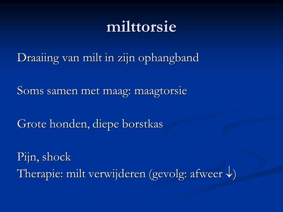 milttorsie Draaiing van milt in zijn ophangband Soms samen met maag: maagtorsie Grote honden, diepe borstkas Pijn, shock Therapie: milt verwijderen (gevolg: afweer  )