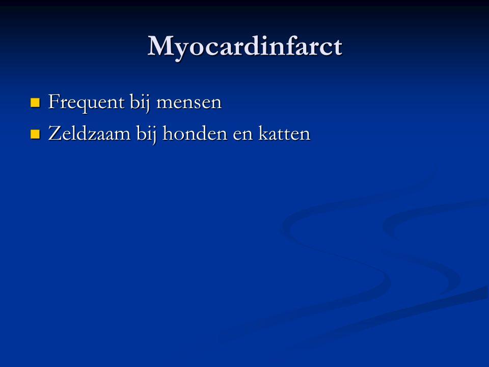Myocardinfarct Frequent bij mensen Frequent bij mensen Zeldzaam bij honden en katten Zeldzaam bij honden en katten