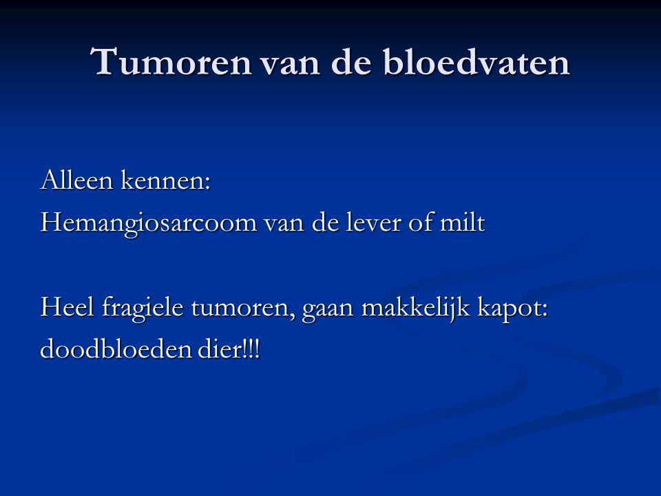 Tumoren van de bloedvaten Alleen kennen: Hemangiosarcoom van de lever of milt Heel fragiele tumoren, gaan makkelijk kapot: doodbloeden dier!!!