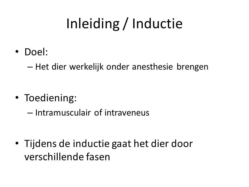 Inleiding / Inductie Doel: – Het dier werkelijk onder anesthesie brengen Toediening: – Intramusculair of intraveneus Tijdens de inductie gaat het dier door verschillende fasen