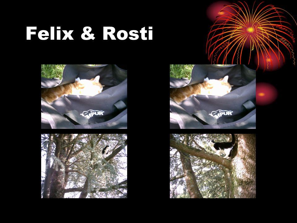 Felix & Rosti