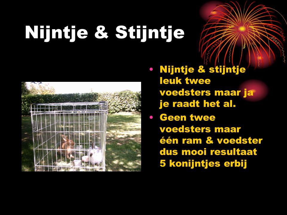 Nijntje & Stijntje Nijntje & stijntje leuk twee voedsters maar ja je raadt het al.