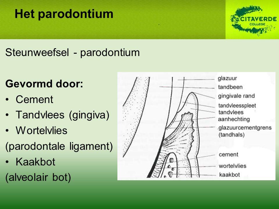 Steunweefsel - parodontium Gevormd door: Cement Tandvlees (gingiva) Wortelvlies (parodontale ligament) Kaakbot (alveolair bot) Het parodontium