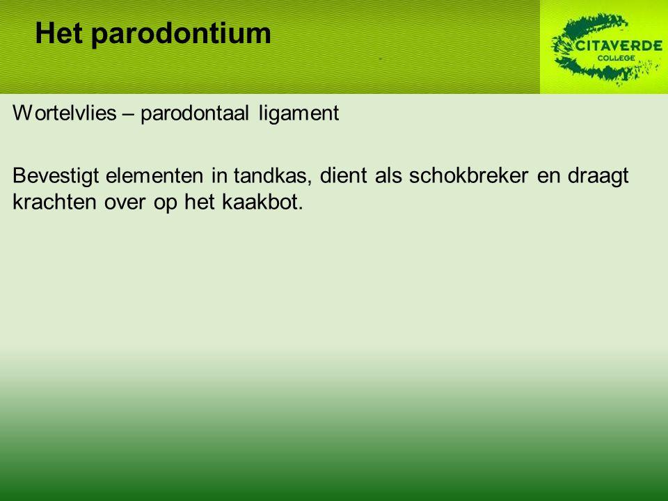 Wortelvlies – parodontaal ligament Bevestigt elementen in tandkas, dient als schokbreker en draagt krachten over op het kaakbot.