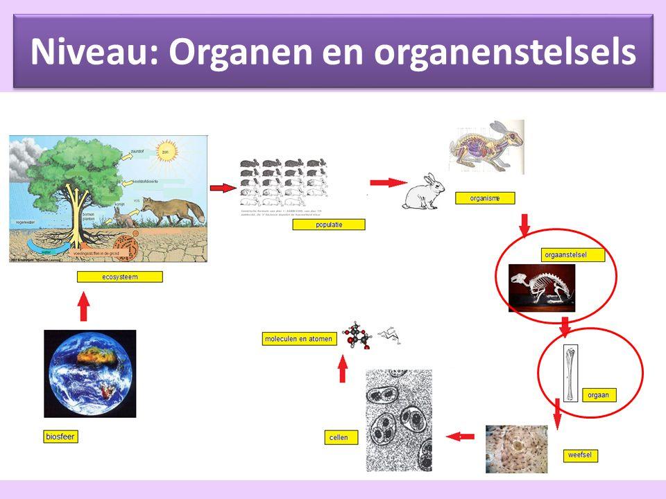 Organen Een orgaan = een onderdeel van een organisme dat een speciale taak (of taken) uitvoert.
