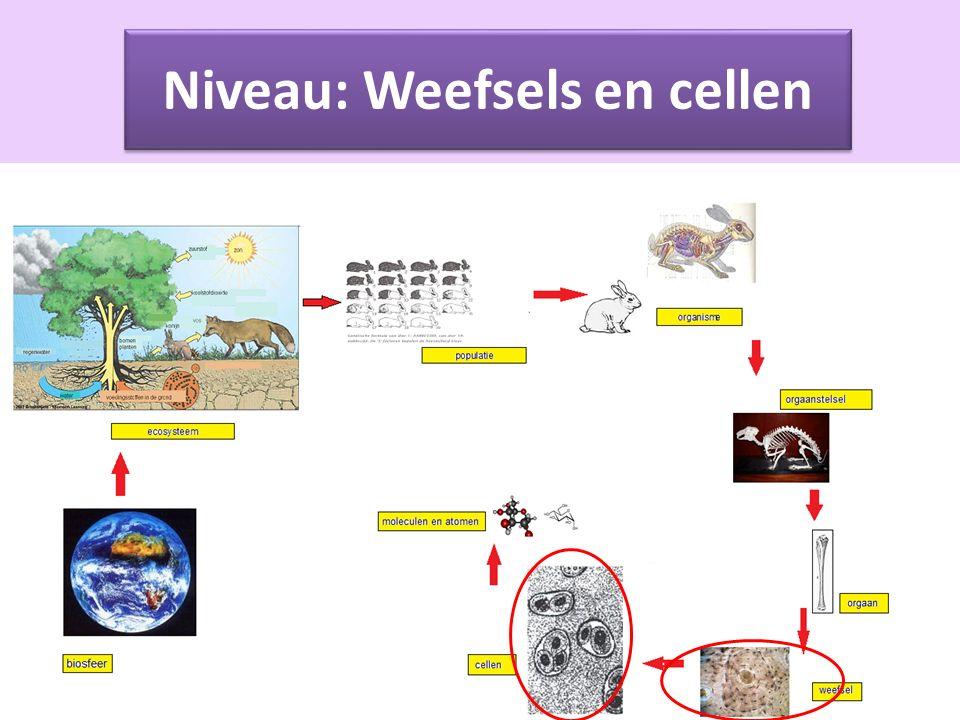 Weefsels en Cellen Alle organismen zijn opgebouwd uit cellen.