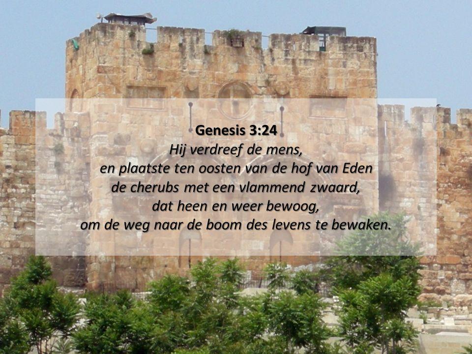 Genesis 3:24 Hij verdreef de mens, en plaatste ten oosten van de hof van Eden de cherubs met een vlammend zwaard, dat heen en weer bewoog, om de weg naar de boom des levens te bewaken.