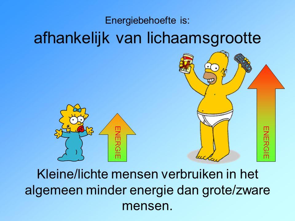 Energiebehoefte is: afhankelijk van lichaamsgrootte Kleine/lichte mensen verbruiken in het algemeen minder energie dan grote/zware mensen.